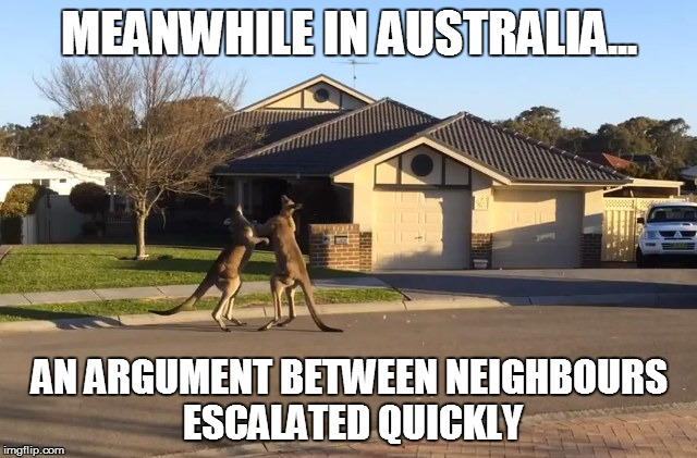 Meanwhile In Australia an argument between neighbours Kangaroo Memes