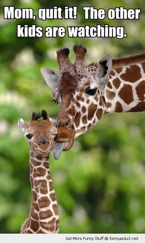 Mom Quit It The Other Kids Are Watching Giraffe Meme