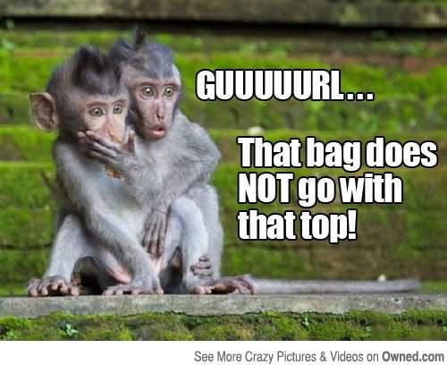 Monkey Meme Guuuuurl that bag does not go with that