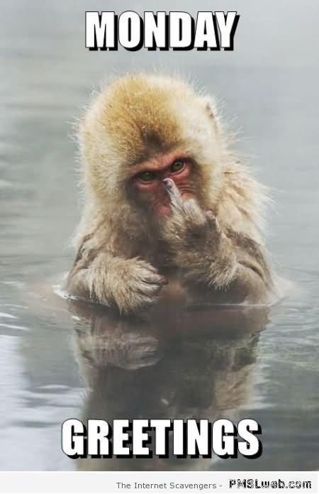 Monkey Meme Monday greetings