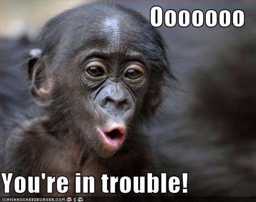Monkey Meme Oooooooo you're in trouble