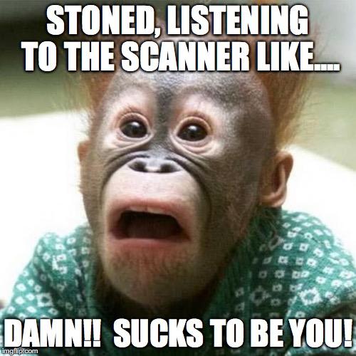Monkey Meme Stoned listening to the scanner like