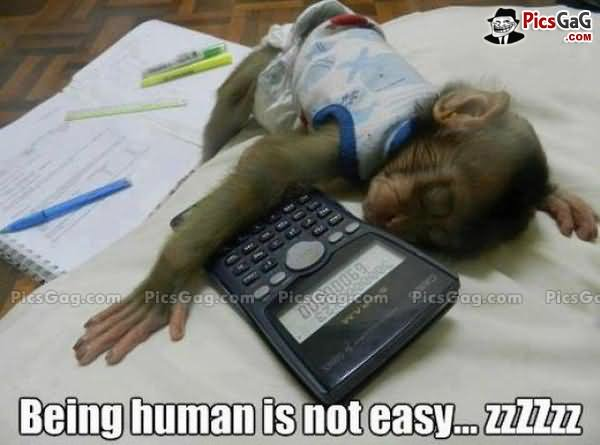 Monkey Memes Being human is not easy zzzzzzz