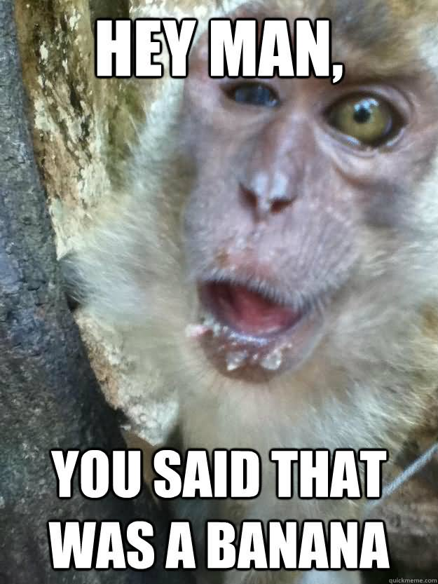 Monkey Memes Hey man you said that was a banana