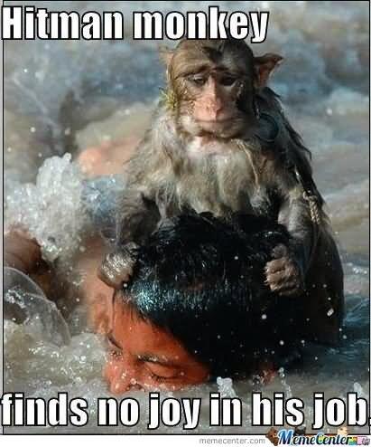 Monkey Memes Hitman monkey finds no joy in his job