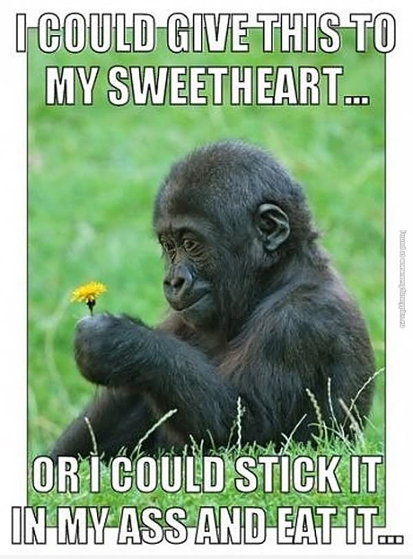 Monkey Memes I could give this to my sweetheart