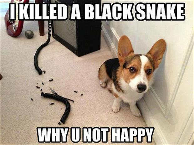 Monkey Memes I killed a black snake