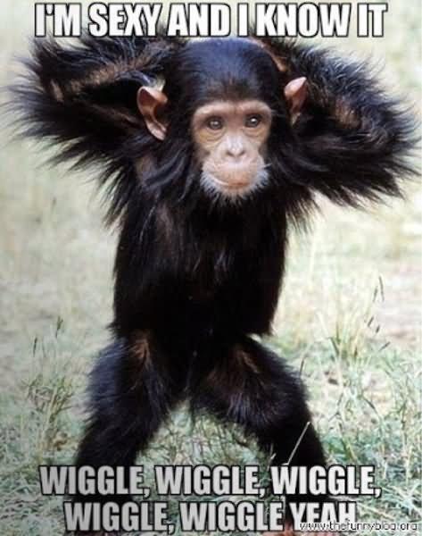 Monkey Memes Im sexy and i know it wiggle wiggle wiggle