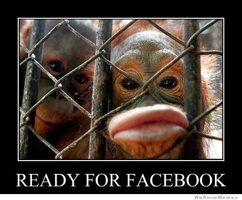 Monkey Memes Ready for facebook