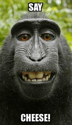 Monkey Memes Say cheese