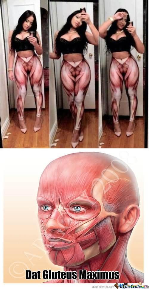 Muscle Meme Dat gluteus maximus