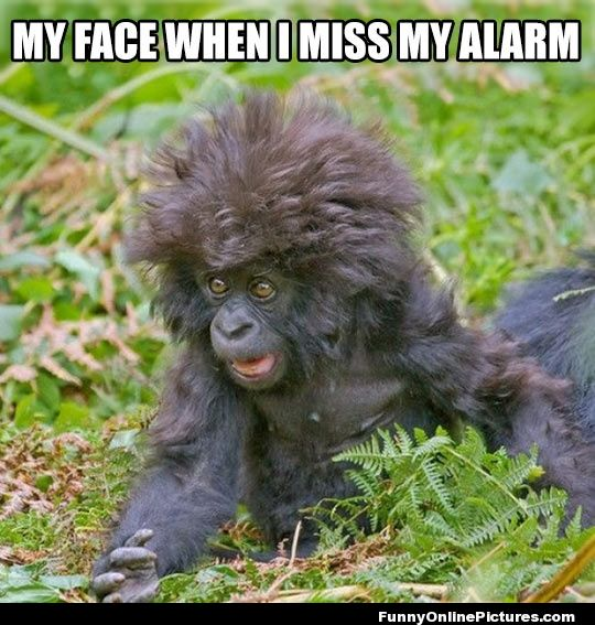 My face when i miss my alarm Monkey Meme