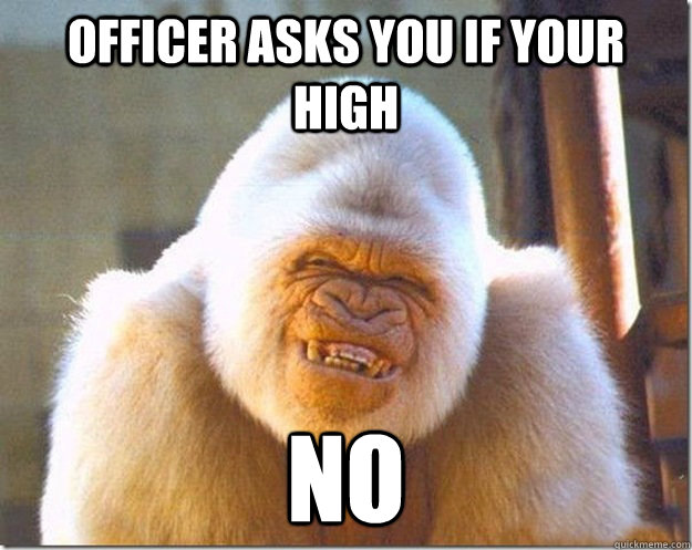 Officer asks you if your high no Monkey Meme