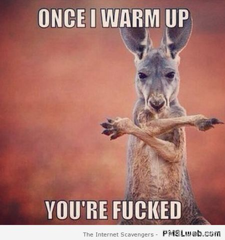 Once i warm up you're fucked Kangaroo Memes