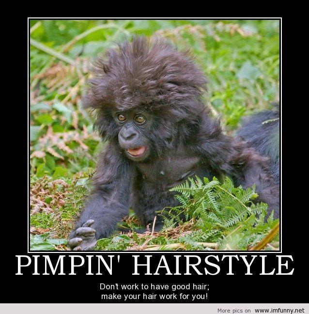 Pimpin hairstyle Monkey Meme