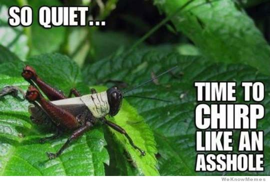 So Quiet time to chirp lik an asshole Cricket Meme