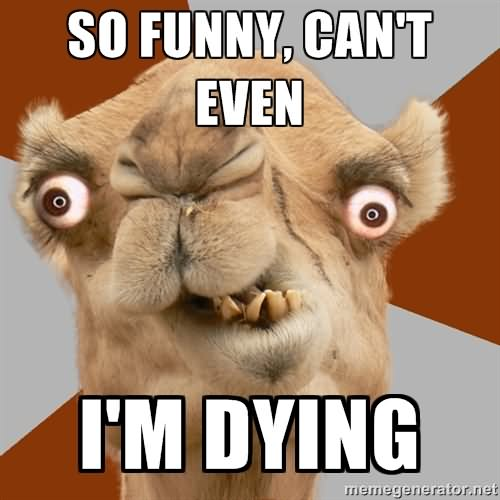 So funny can't even im dying Camel Meme