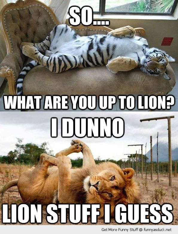 So what are you up to lion Meme