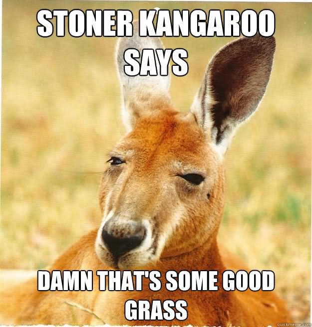 Stoner kangaroo says damn that's some Kangaroo Memes