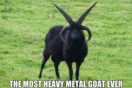 The most heavy metal goat ever Goat Meme