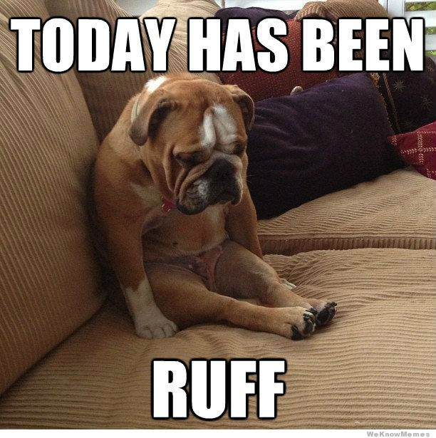 Today has been ruff Dog Meme