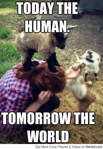 Today the human tomorrow the world Goat Meme