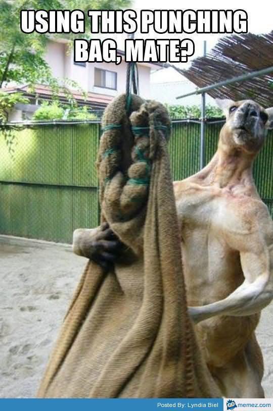 Using this punching bag mate Kangaroo Meme