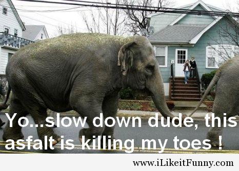 Yo slow down dude this asfalt Elephant Meme