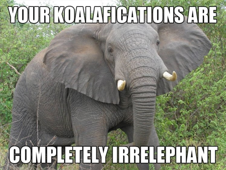 Your koalafications are completely Elephant Meme