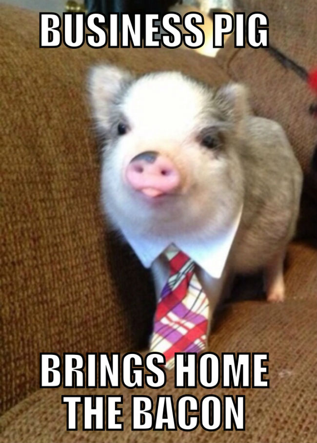 Business pig brings home the bacon Pigs Meme