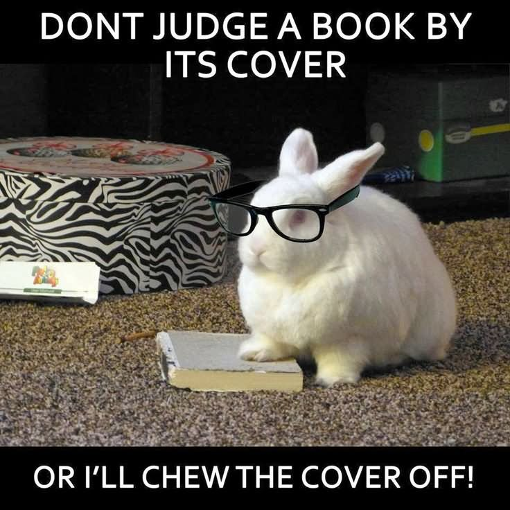 Don't judge a book by it's cover or Rabbit Memes