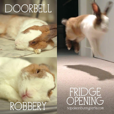 Doorbell robbery fridge opening Rabbit Memes