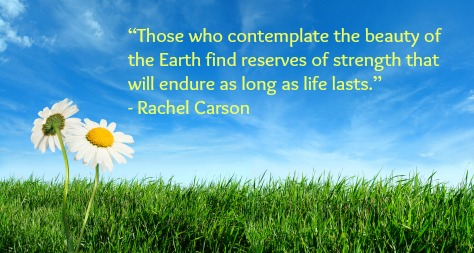 Earth Day Quotes those who contemplate the beauty of the