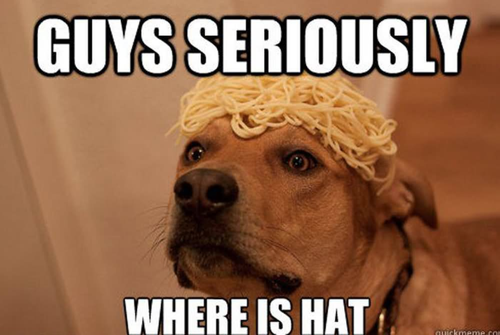 Guys seriously where is hat Pet Memes