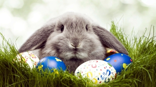 Happy Easter Wishes Images 40116