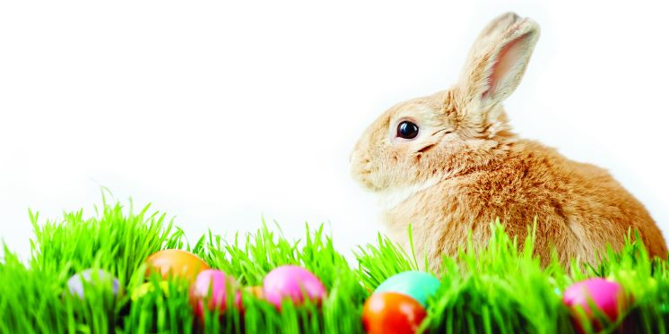 Happy Easter Wishes Images 40118