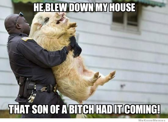 He blew down my house that son of Pigs Meme