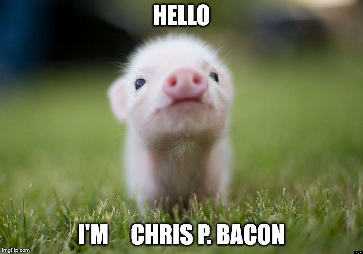Hello I'm chris p bacon `Pigs Meme