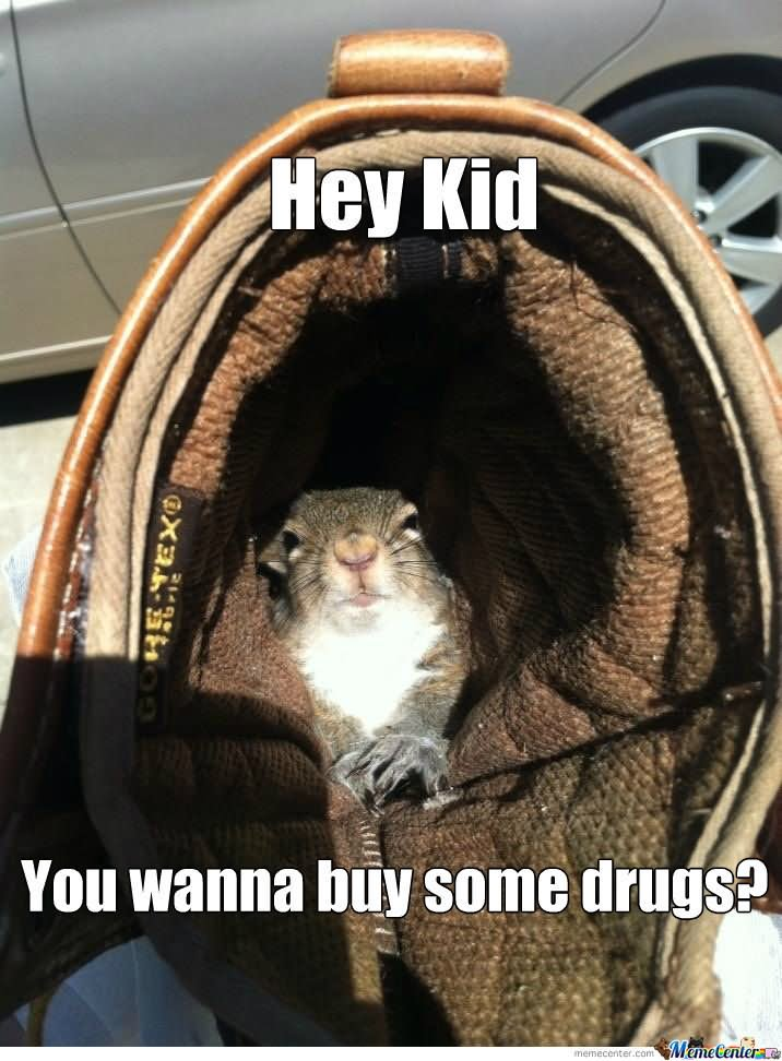 Hey kid you wanna buy some drugs Squirrel Memes
