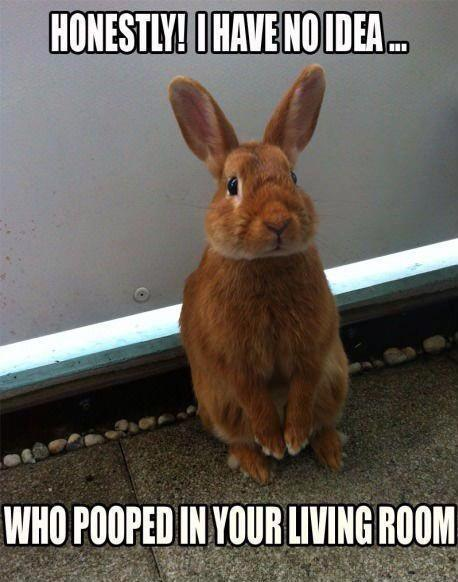 Honestly i have no idea who pooped in you living room Rabbit Memes