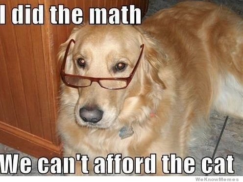 I did the math we can't afford the cat Pet Memes