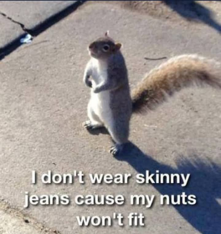 I don't wear skinny jeans cause my nuts won't fit Squirrel Memes