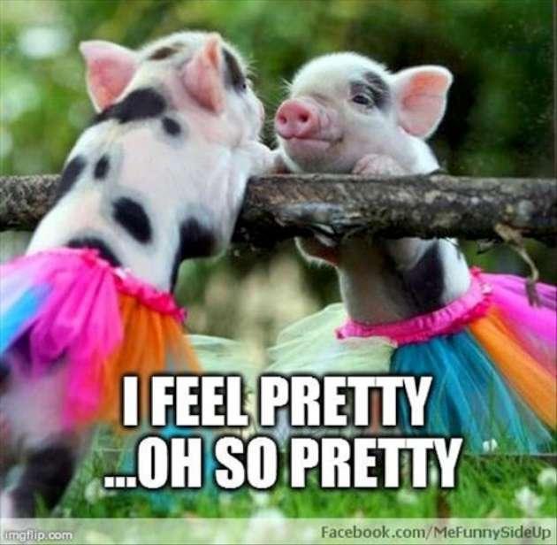 I feel pretty oh so pretty Pigs Meme