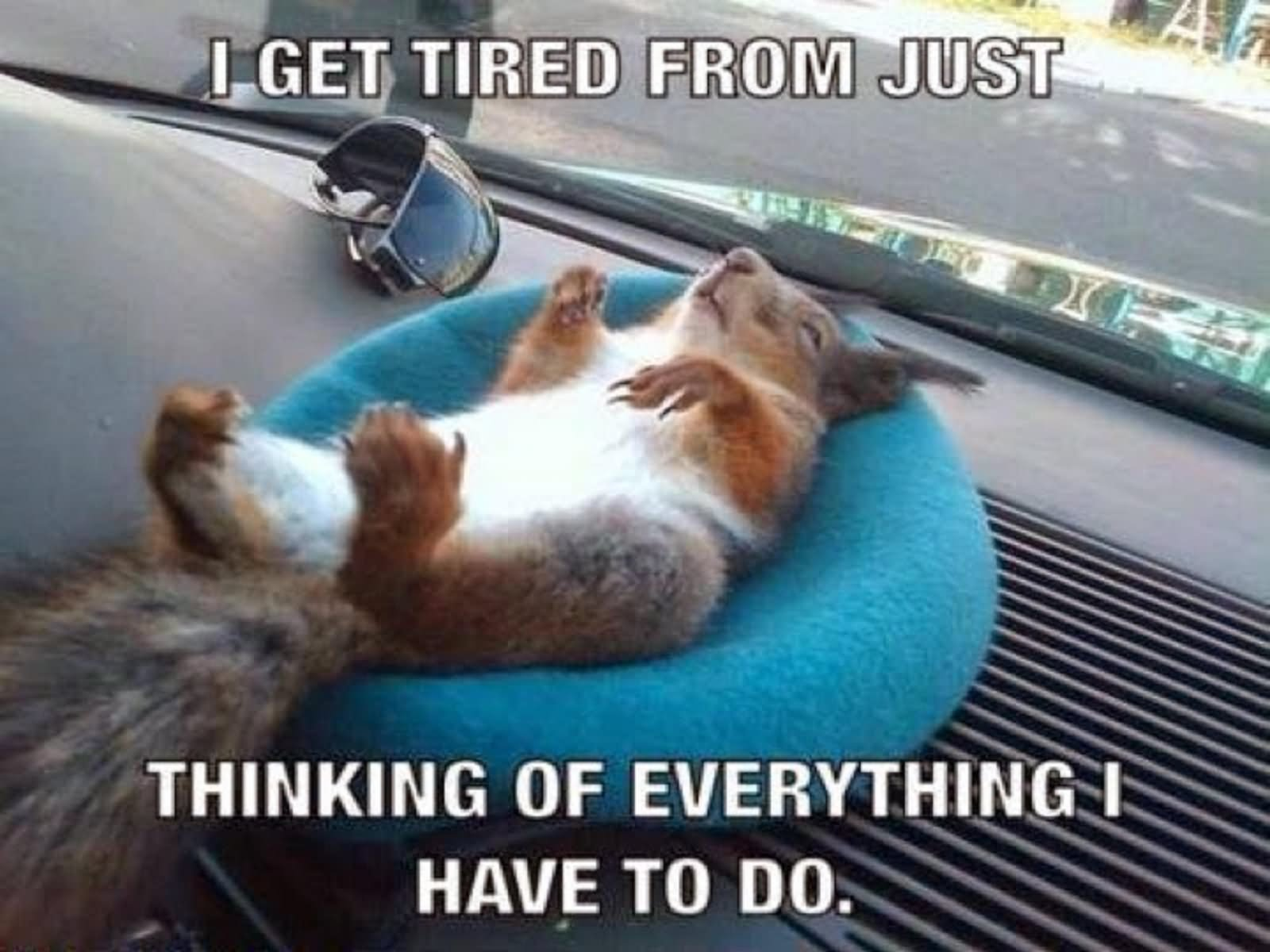 I get tired from just thinking of everything Squirrel Memes
