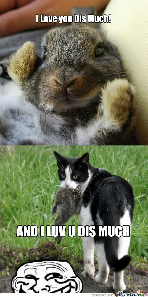 I love you dis much and i love u dis much Rabbit Memes