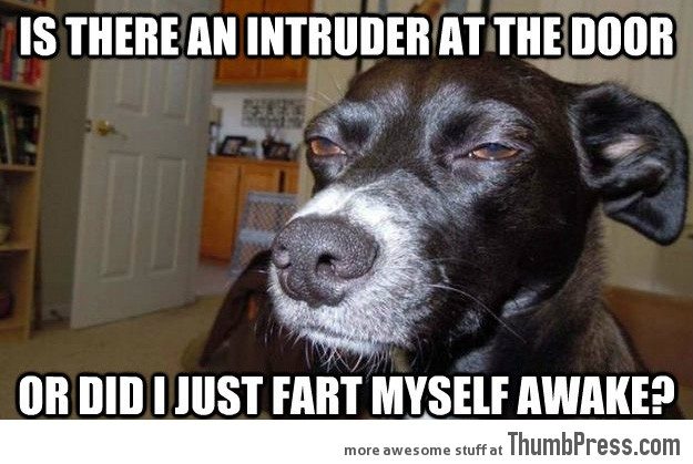 Is there an intruder at the door Pet Memes