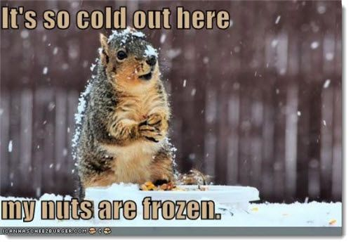 Its so cold out here my nuts are frozen Squirrel Meme it's so cold out here my nuts are frozen squirrel meme picsmine,So Cold Meme