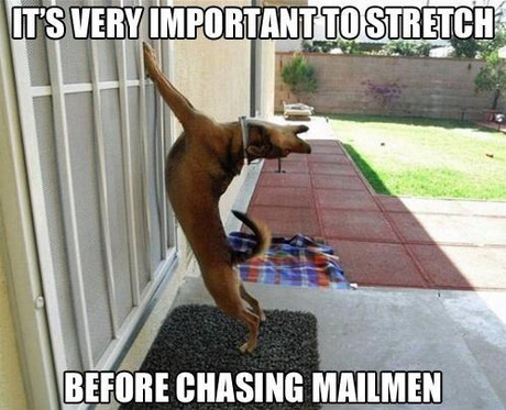 Its very important to stretch before Pet Memes