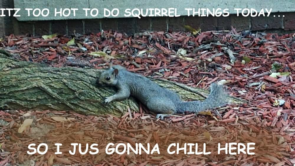Itz too hot to do squirrel things today Squirrel Memes
