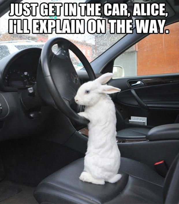 Just get in the car alice ill explain on the way Rabbit Memes